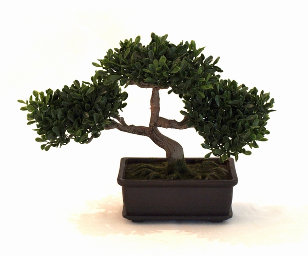 artificial miniature bonsai tree boxwood bonsai realistic. Black Bedroom Furniture Sets. Home Design Ideas